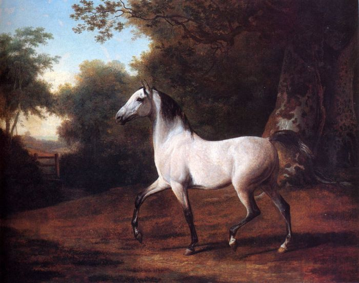 Jacques-Laurent Agasse Reproductions-A Grey Arab Stallion In A Wooded Landscape