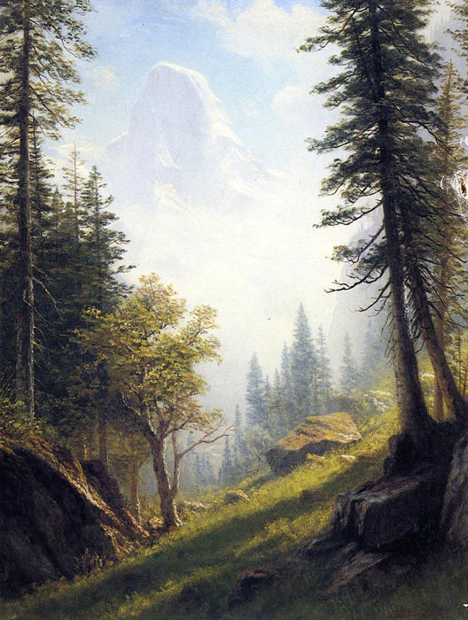 Mountains and Forests Landscapes