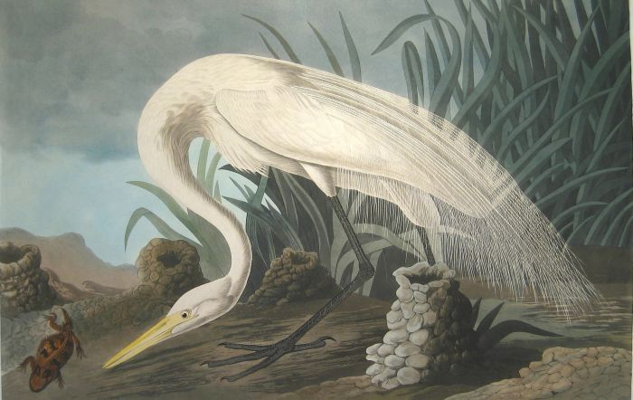 Paintings John James Audubon