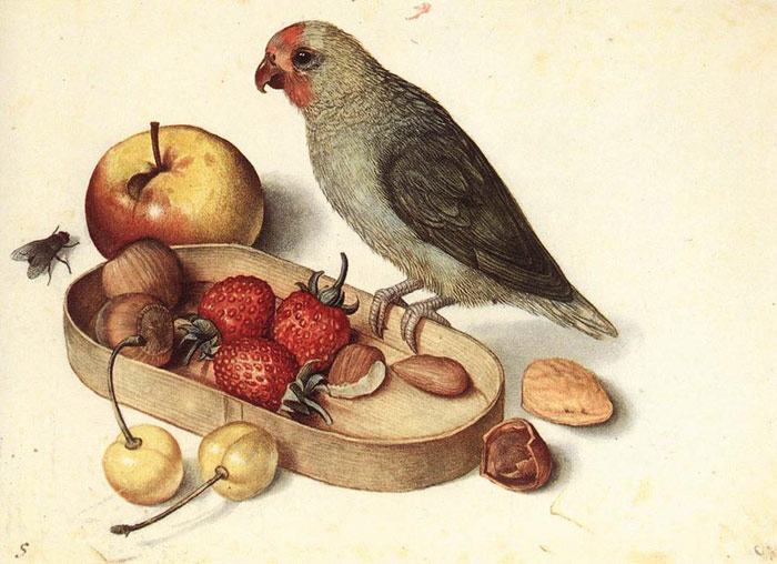 Paintings Reproductions Flegel, Georg Still Life with Pygmy Parrot, Undated