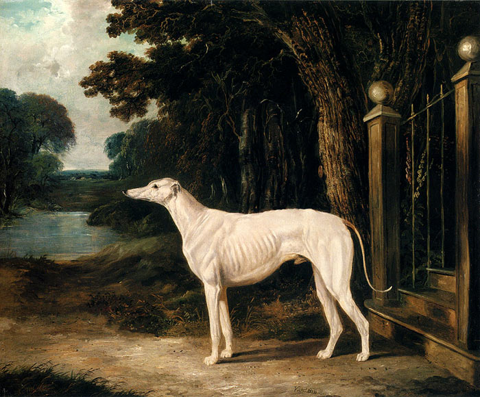 John Frederick Herring Snr Reproductions-Vandeau, A White Greyhound, 1839