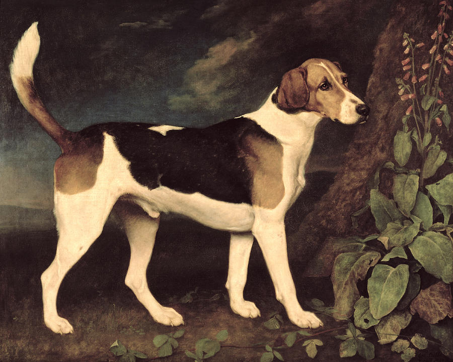 George Stubbs Reproductions-A Foxhound, Ringwod, 1972