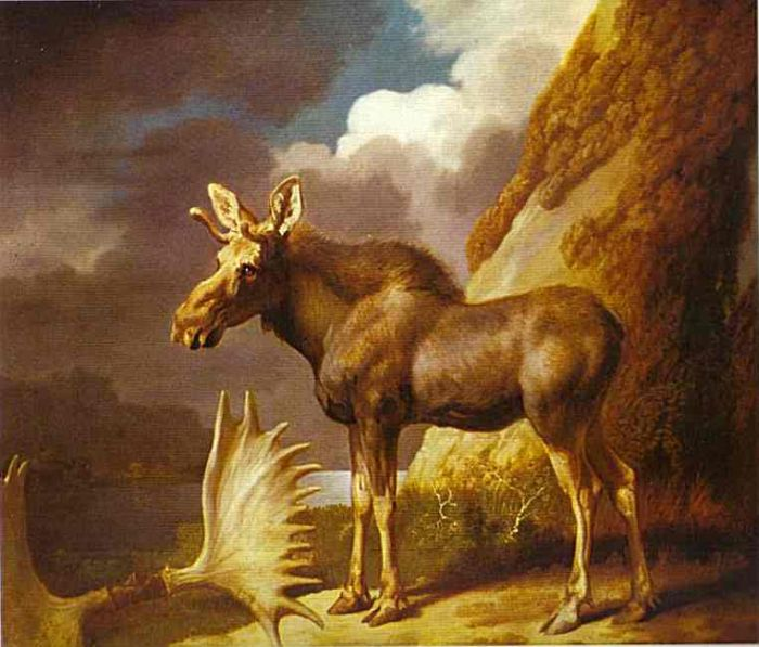 Paintings Reproductions Stubbs  George The Moose, 1770