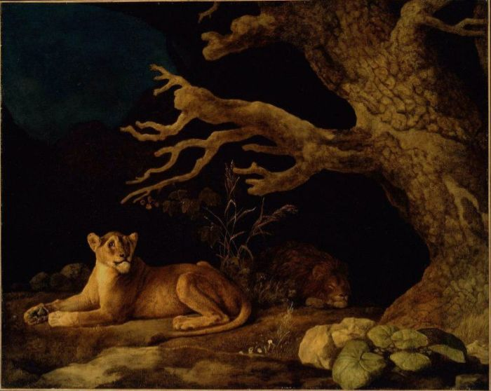 Paintings Reproductions Stubbs  George Lion and Lioness, 1771